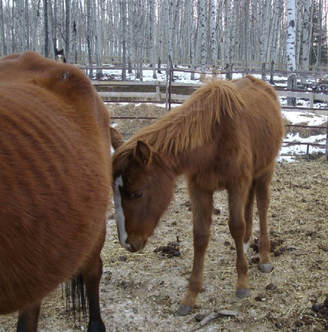 MiracleRescue - Bear Valley Rescue, Alberta, Canada